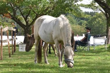 八幡平市で「馬とのふれあい・乗馬体験」開催