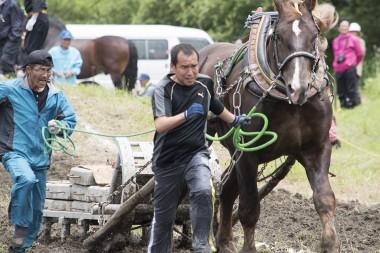 東北馬力大会 遠野馬の里大会