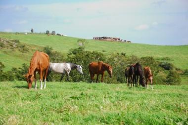 「第1回 いわて馬事文化シンポジウム」開催のお知らせ