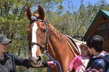 軽米町で馬とのふれあい