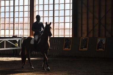 遠野市乗用馬市場開催のお知らせ