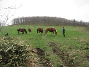 牛馬の預託事業の御紹介(外山畜産研究所)