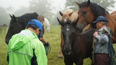 馬の血統登録等について