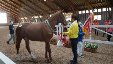 馬の種類について