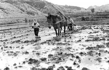 企画展「馬と農民」が開催されています