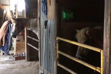 佐々木牧場を訪問